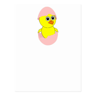 Baby Chick Maternity Pink For Girls Postcard