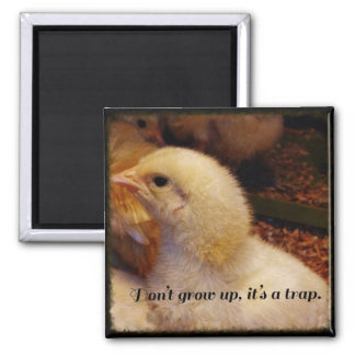 Baby Chick Photo Quote Magnet