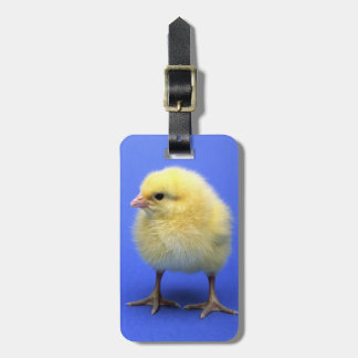 Baby chicken. luggage tag