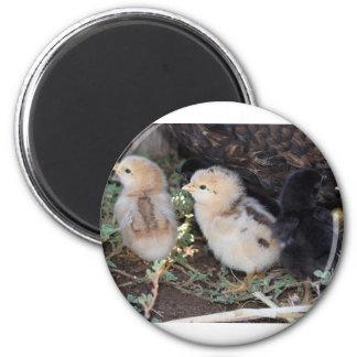 Baby Chicks 2 Inch Round Magnet