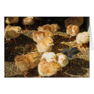 Baby Chicks Card