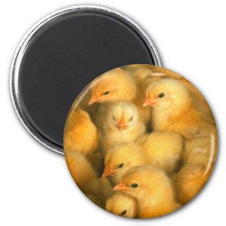 Baby Chicks Chick Chicken Chickens 2 Inch Round Magnet