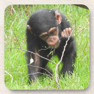 Baby Chimpanzee Coasters