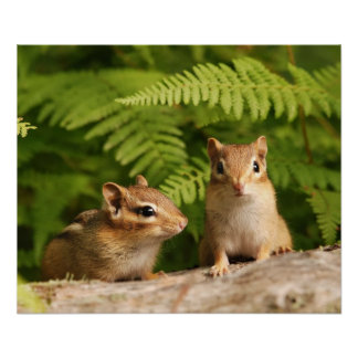 baby chipmunk siblings poster