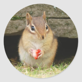 baby chipmunk with strawberry classic round sticker