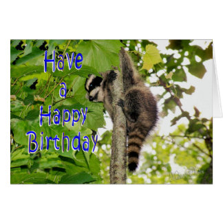 Baby Coon Bday wishes Card