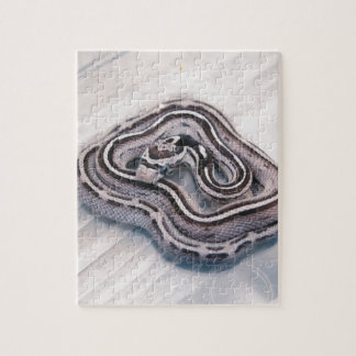 Baby Corn Snake Jigsaw Puzzle