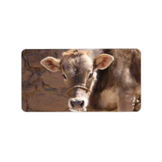 Baby Cow - Brown Baby Calf Close Up Face Label