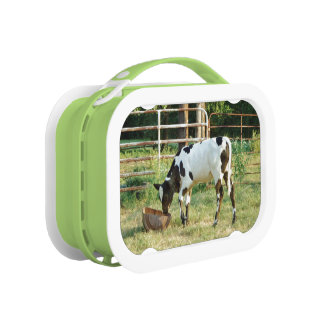Baby Cow Lunch Boxes