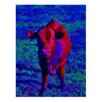 Baby Cow Purple grass Postcard