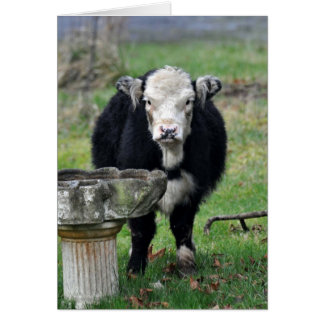 Baby Cow's a Drooling Greeting Card