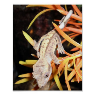 Baby Crested Gecko Print/Poster Poster
