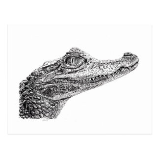 Baby Crocodile Ink Drawing Postcard