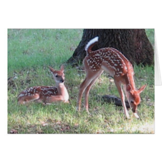 Baby Deer 2017 - Good Morning Card