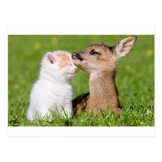 Baby Deer and Kitten Cuddle Postcard