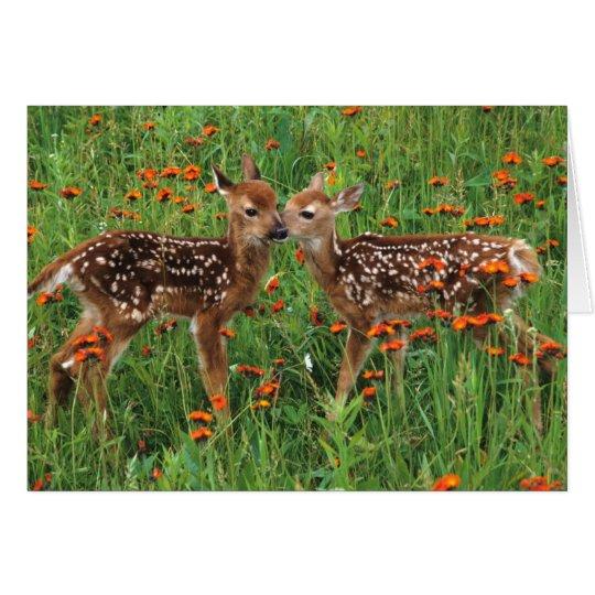 Baby Deer Cards
