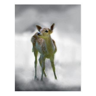Baby deer's curiosity postcard