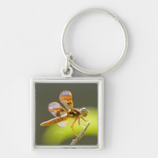 Baby Dragonfly Lit By The Sun by Julie Everhart Keychain