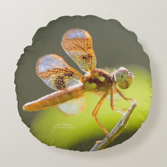 Baby Dragonfly Lit By The Sun Round Pillow- Julie Round Pillow
