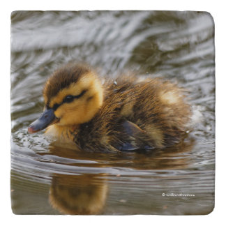 Baby Duckling Paddles in the Local Pond Trivet