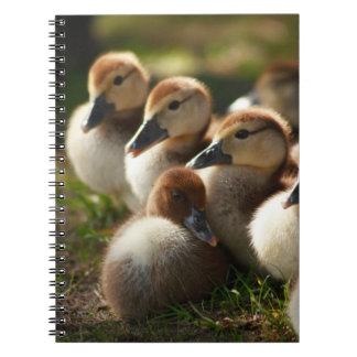Baby Ducks Spiral Notebook