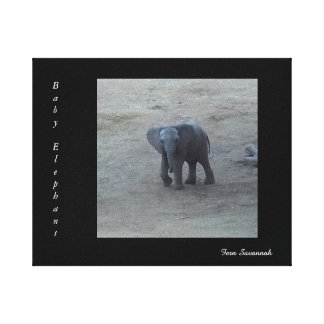 Baby Elephant on Gallery Canvas- By Fern Savannah Canvas Print