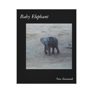 Baby Elephant on Gallery Canvas- By Fern Savannah Canvas Print