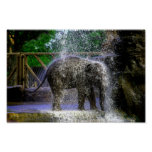 Baby Elephant Playing In Waterfall Poster