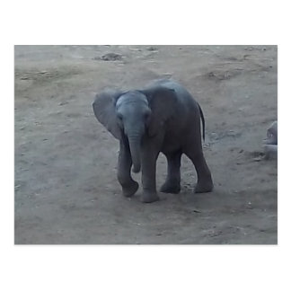 Baby Elephant Postcard - by Fern Savannah