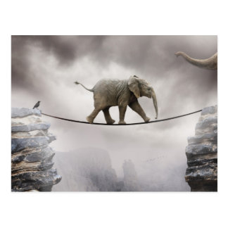 Baby Elephant Walks The Tightrope Postcard