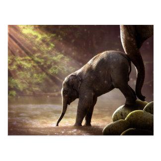 Baby Elephant's First Bath Postcard