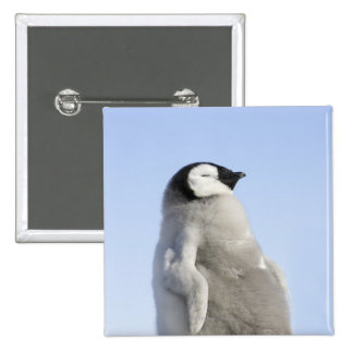 Baby Emperor Penguin, Snow Hill Island 2 Inch Square Button