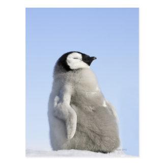Baby Emperor Penguin, Snow Hill Island Postcard