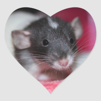 Baby Fancy Rat on a Heart Sticker