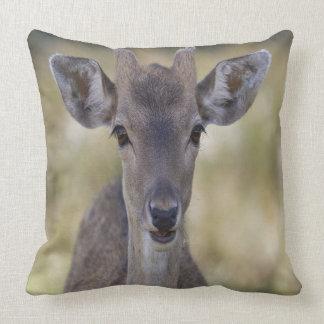 Baby Fawn Buck Throw Pillow