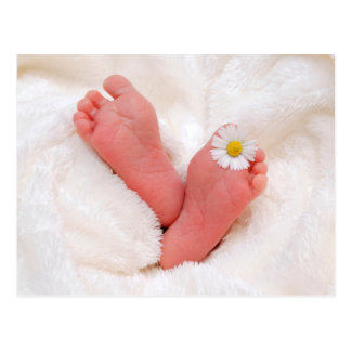 Baby Feet With Daisy Postcard