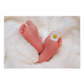 Baby Feet With Daisy Poster