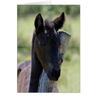 Baby foal card