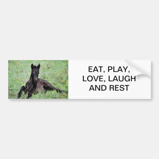 Baby foal lying in the meadow bumper sticker