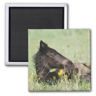 Baby foal lying in the meadow refrigerator magnet