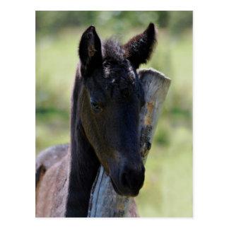 Baby foal postcard
