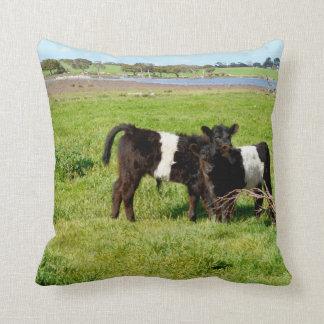 Baby Galloway Calves, Throw Cushion