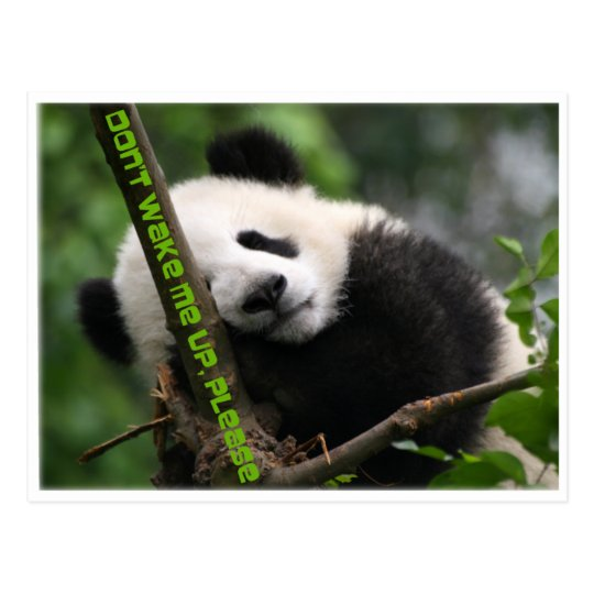 baby giant panda postcard