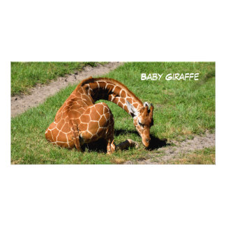 Baby Giraffe At Wildlife Reserve Personalized Photo Card