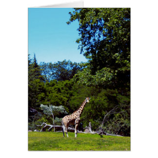 Baby Giraffe In The Sun Card