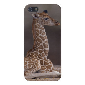 Baby Giraffe iPhone Savvy Case Case For iPhone 5/5S
