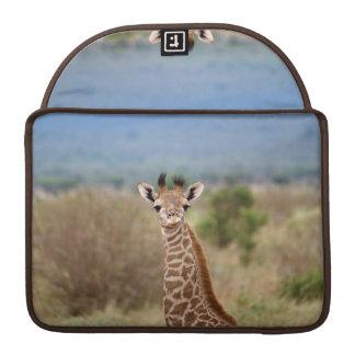 "Baby giraffe picture, Kenya, Africa | 13"" MacBook Pro Sleeve"