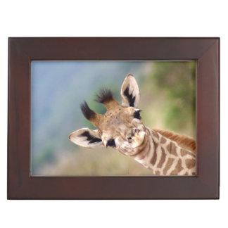 Baby giraffe picture, Kenya, Africa | Keepsake Box