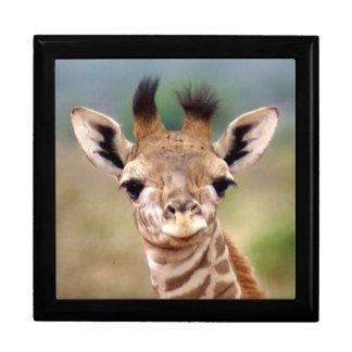 Baby giraffe picture, Kenya, Africa | Large Jewelry Box