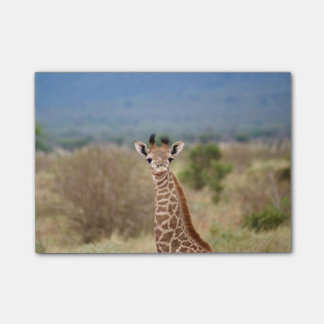 Baby giraffe picture, Kenya, Africa | Post-it Notes